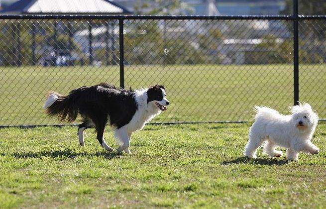 Via al piano di riqualificazione e realizzazione delle aree cani a Nichelino