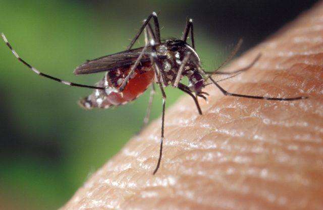 LA LOGGIA – Lotta alle zanzare, nuovo passaggio con i larvicidi