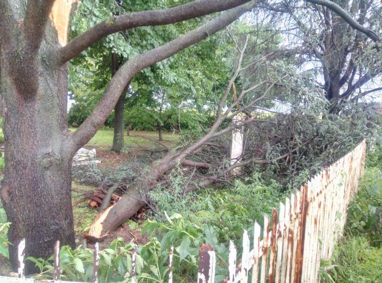 CARIGNANO – Il vento forte abbatte due alberi in un allevamento di cani