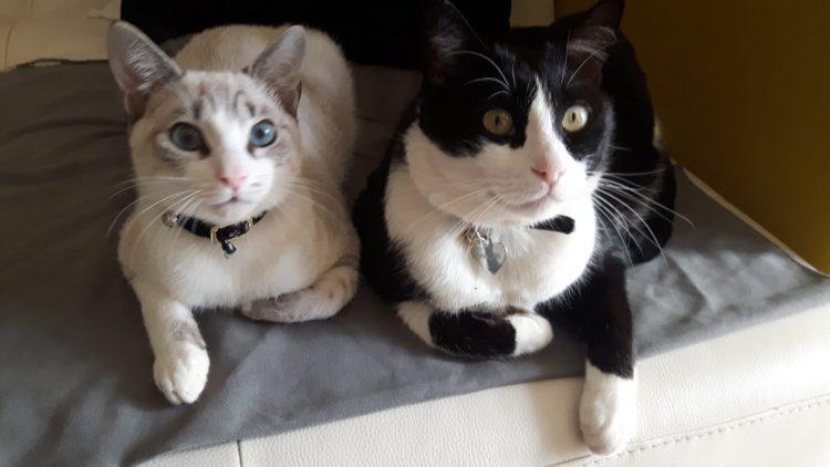 MONCALIERI – Ladri sfondano la vetrata di un veterinario e i gattini in cura scappano