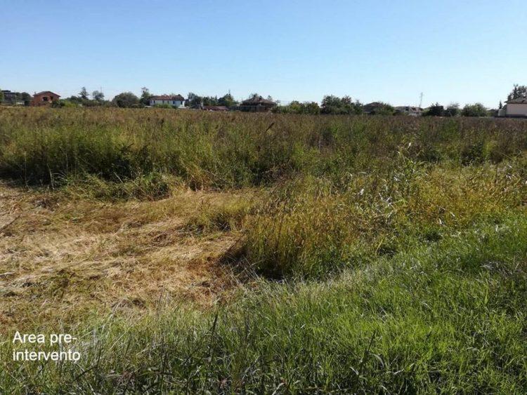 CARMAGNOLA – Via alla piantumazione di mille alberi in via Almese