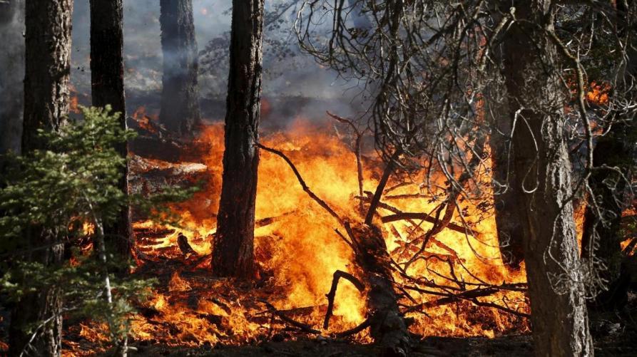 Roghi boschivi: il Piemonte ha revocato lo stato di massima pericolosità