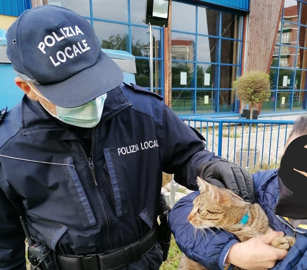 NICHELINO – Gattino impigliato nella rete metallica: salvato dalla polizia locale