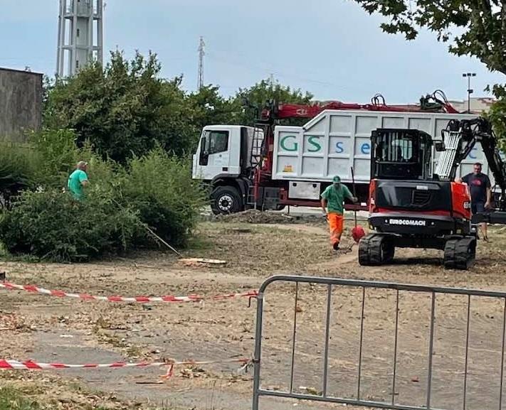 NICHELINO – Una malattia colpisce gli alberi del cimitero