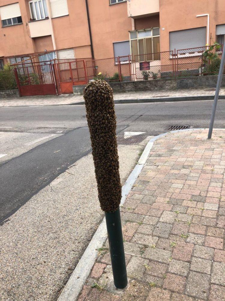 MONCALIERI – Palo del marciapiede trasformato in alveare