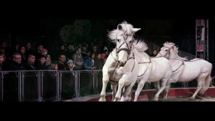 NICHELINO – Comune contrario allo spettacolo equestre
