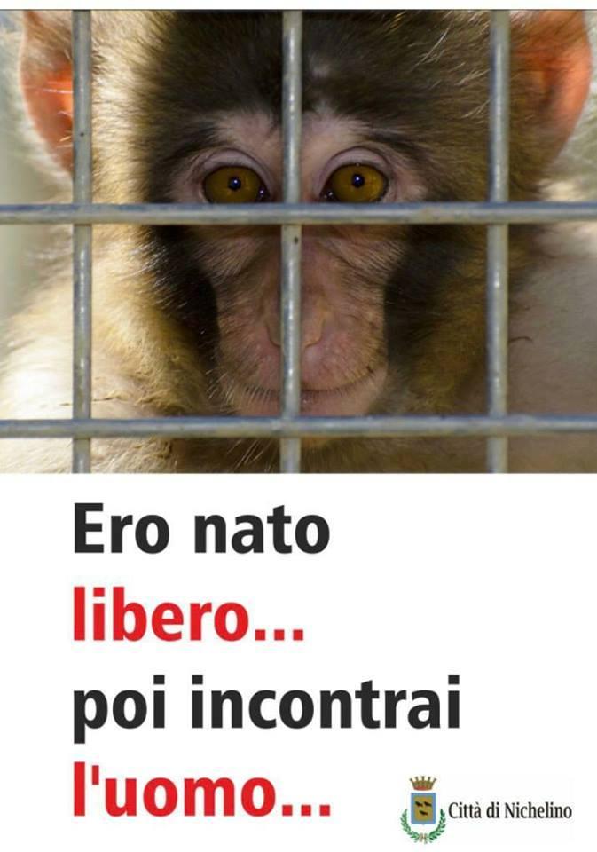 Campagna del Comune di Nichelino contro lo sfruttamento degli animali