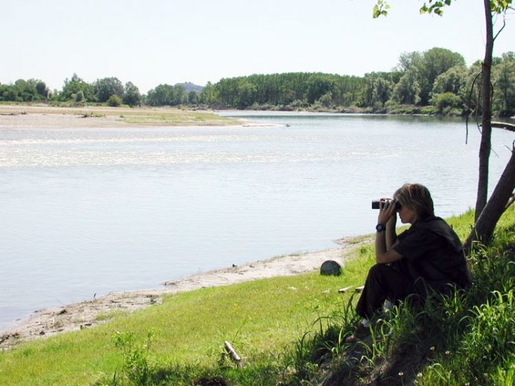 Guardiaparco a caccia di cinghiali, tutela del parco e scuola-lavoro