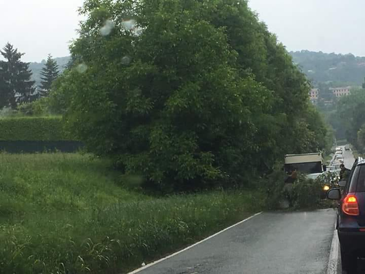 MONCALIERI – Cade un albero in strada Revigliasco: paura e disagi
