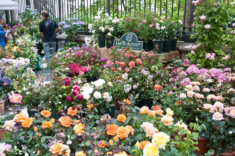 Flor2018, Torino si trasforma in un giardino