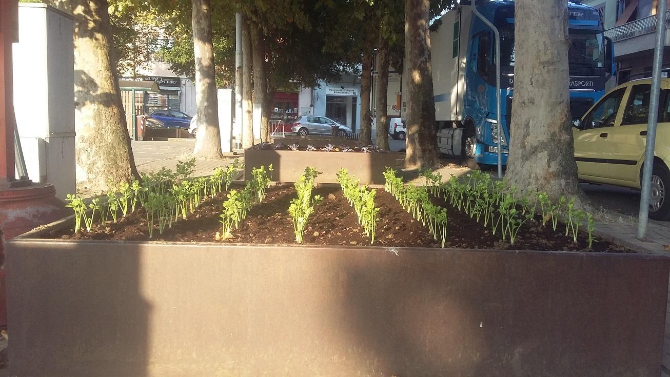 CARMAGNOLA – Nascono le aiuole-orti in piazza IV Martiri