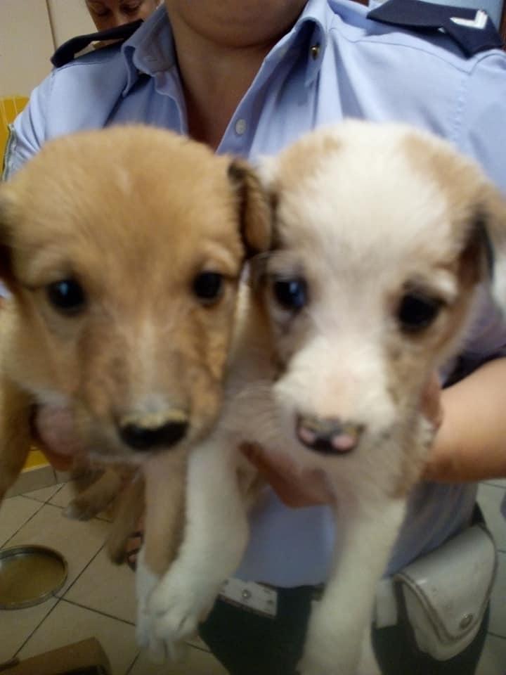 CARMAGNOLA – Otto cagnolini abbandonati in via Gobetti