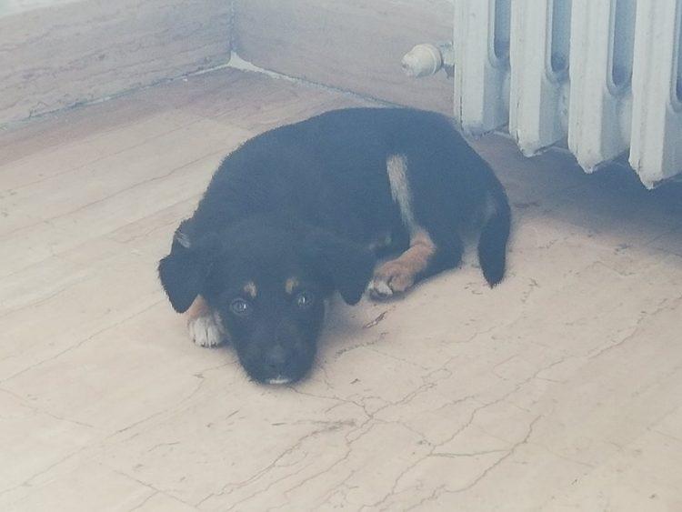 NICHELINO – Trovato un cane spaesato sul ponte Europa: ora è al canile