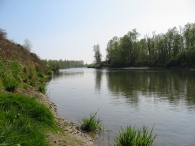 Nelle riserve di pesca scatta il divieto di catturare il Luccio