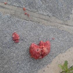 LA LOGGIA – Cane avvelenato con il topicida al Boschetto