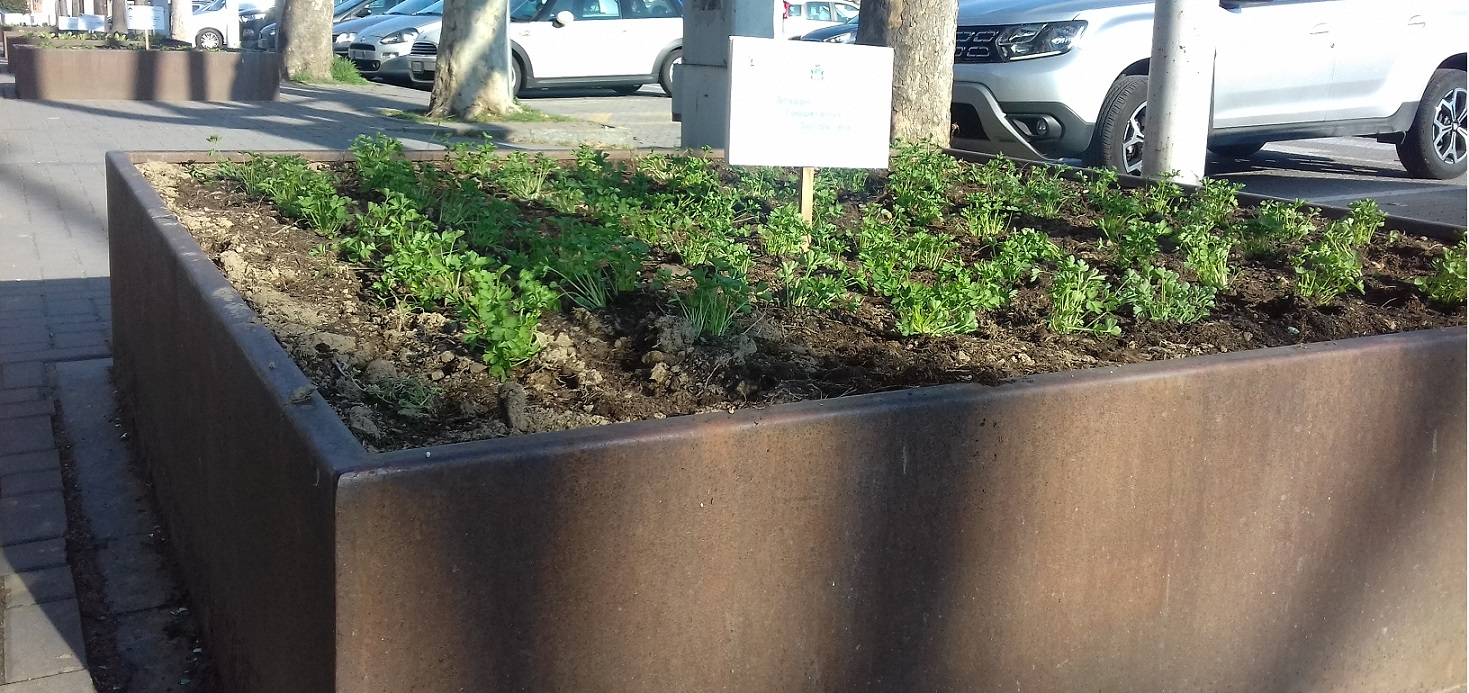 CARMAGNOLA – Prosegue il progetto degli orti nelle aiuole del centro