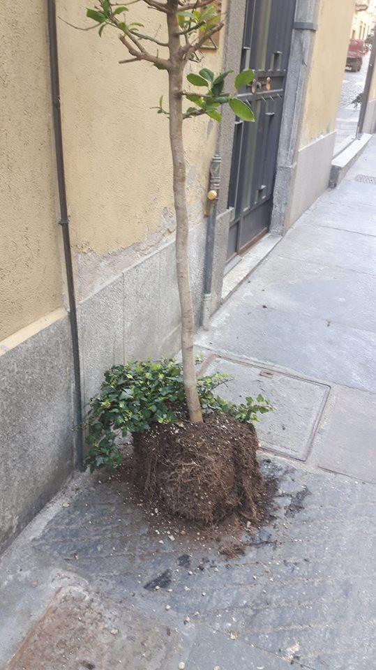 MONCALIERI – Rubano vasi nel centro storico e lasciano lì le piante