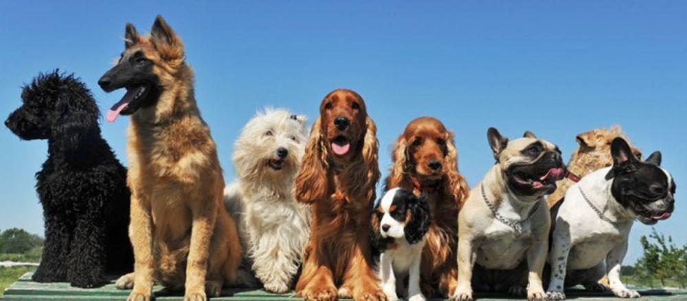 LA LOGGIA – Sfilata canina in piazza Cavour