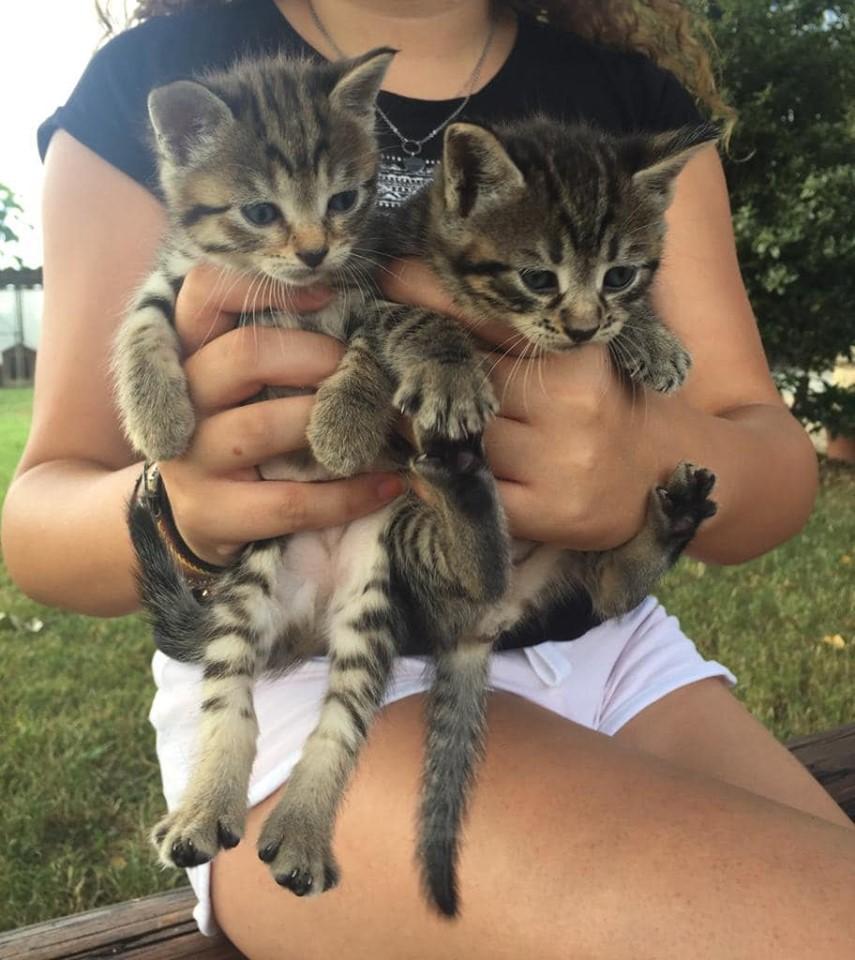 CARMAGNOLA – Gattini abbandonati: parte la gara di solidarietà