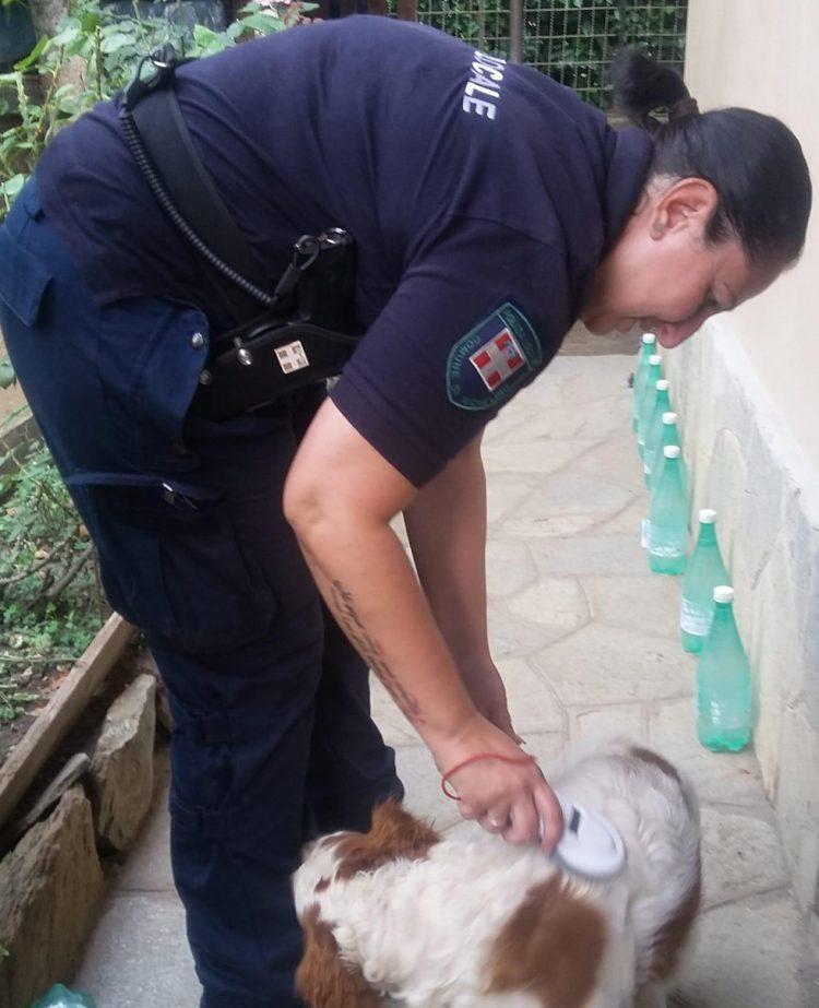 NICHELINO – Maltrattava il cane: denunciato
