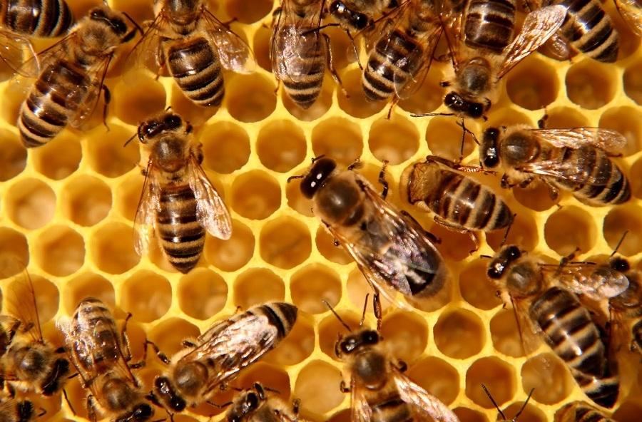 AGRICOLTURA – La Regione in aiuto degli apicoltori