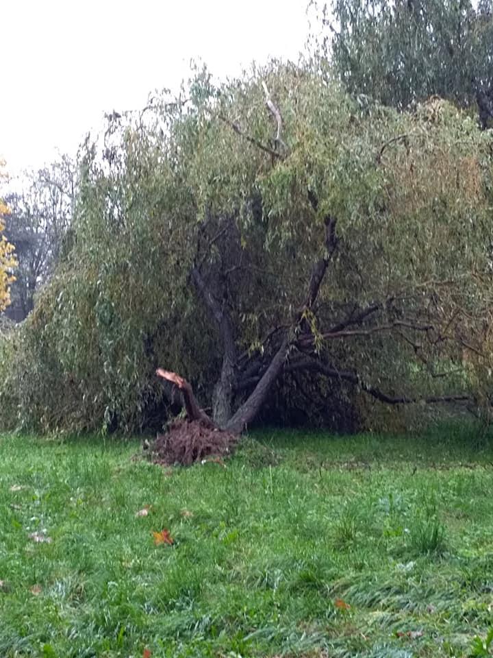 MALTEMPO – Diversi alberi caduti a Nichelino: chiuso per sicurezza il parco Boschetto